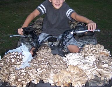 kyle_mushrooms1