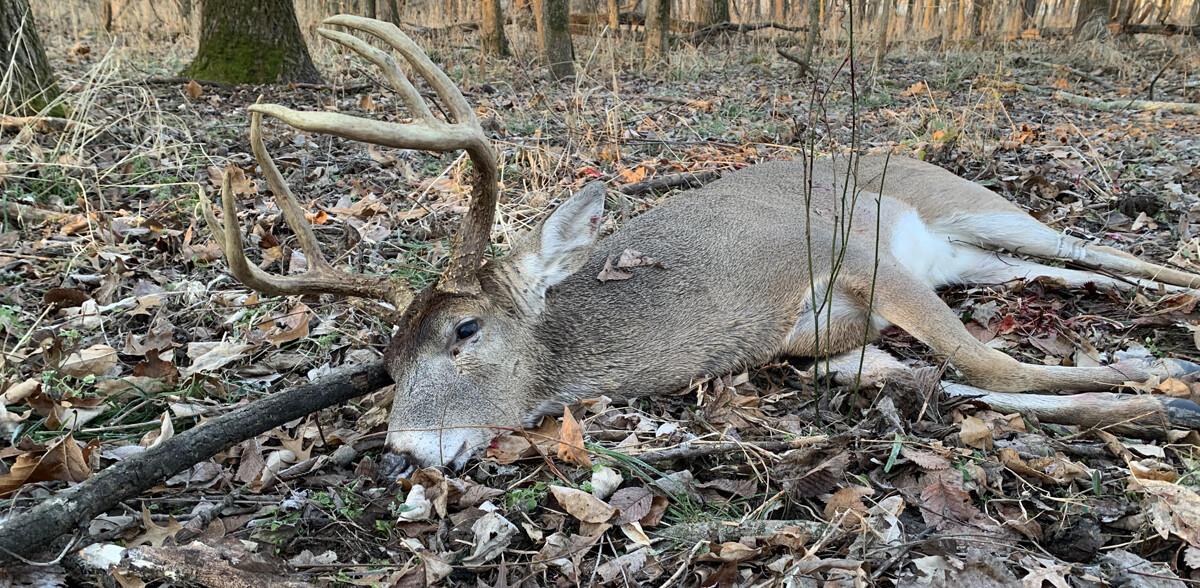 dan_stef_outdoors_2020_deer